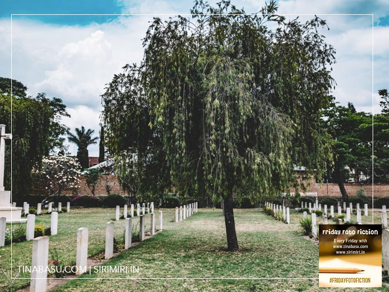 weeping-willow-tree-fiction-sirimiri