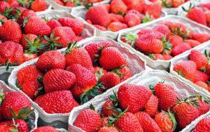 strawberries-Monsoon-Sirimiri-Maharashtra