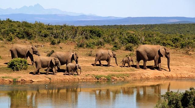 elephant-camp-karnataka