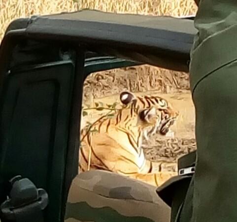 Ranthambore-Safari-Jeep-sirimiri