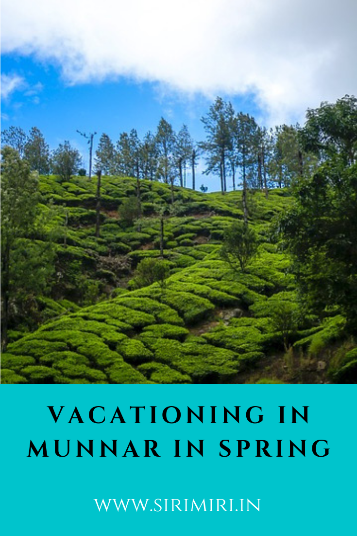 Vacationing in Munnar in Spring